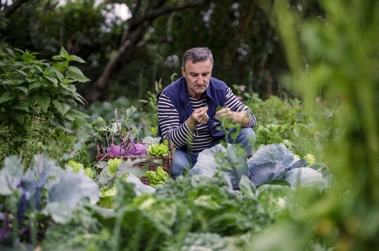 Kräuter: Kochen mit Garten- und Wildkräutern