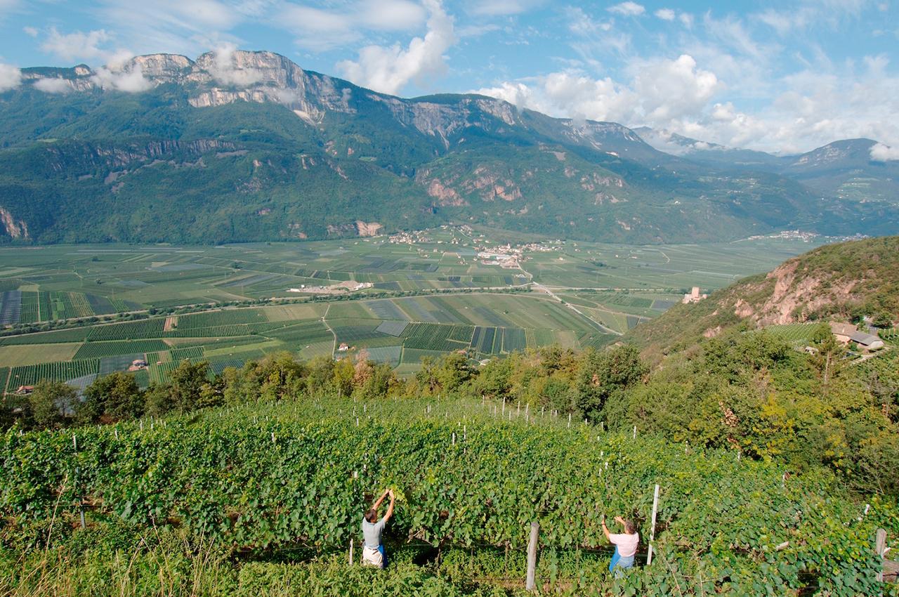 Charakterstarke Weine aus der Kellerei Terlan in Südtirol